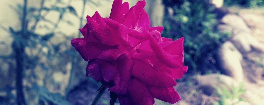 monsoon in corbett