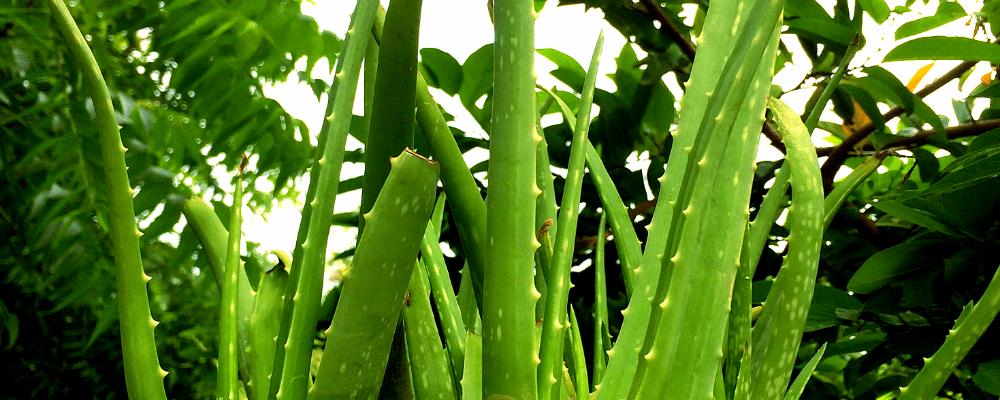 plants in corbett