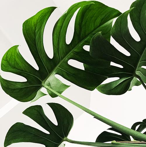 Photo de plante