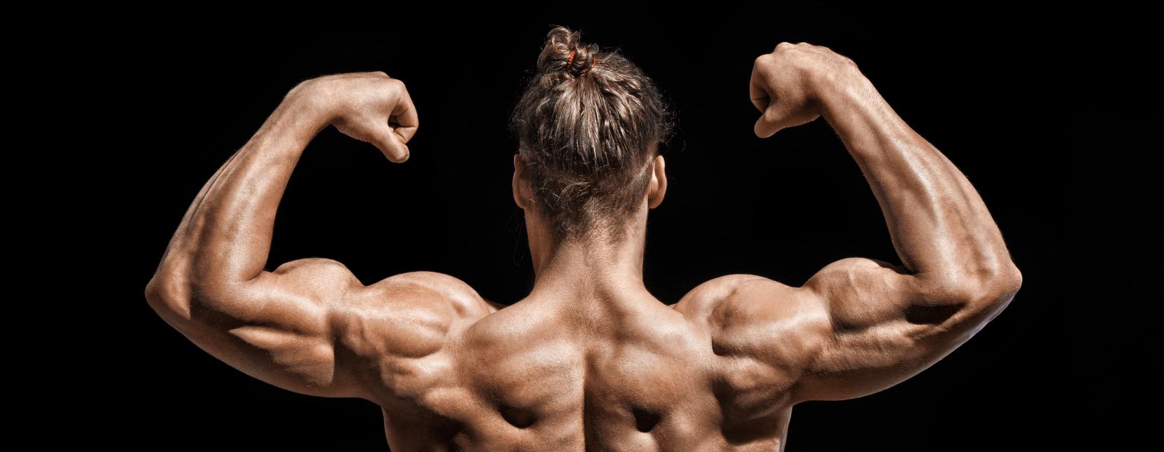 Muskeln frauen wieviel bei Knochenmasse, was