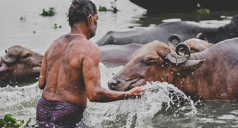 「牛」在不同文化的象徵與意義
