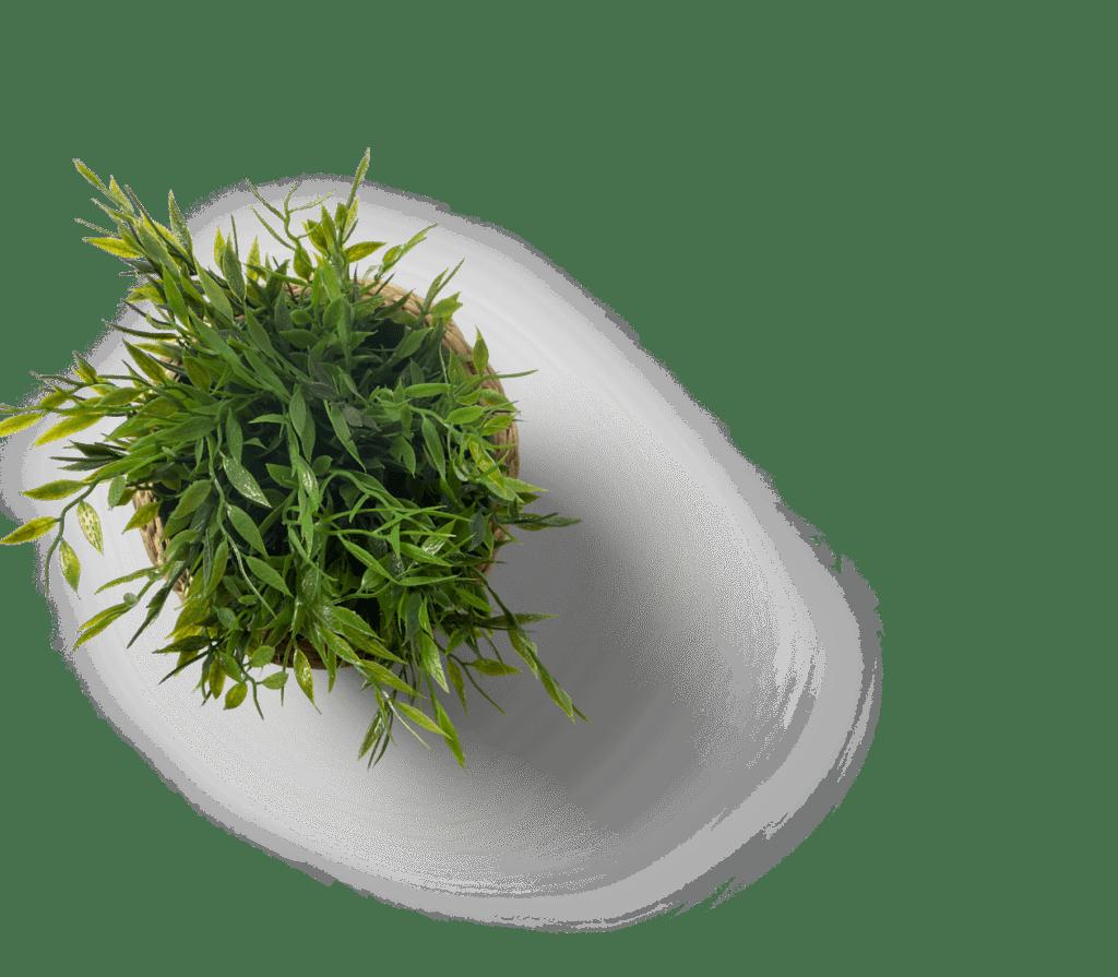 A plant.