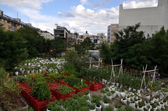 Ponad pół hektara upraw pomiędzy blokami © Prinzessinnengarten