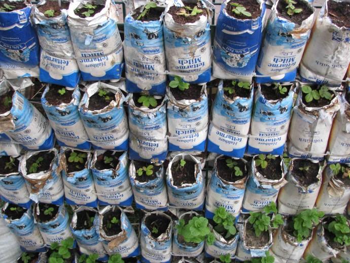 Sadzonki w kartonikach po mleku © Prinzessinnengarten