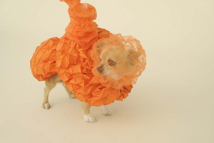 Haute couture dla pieseczka © Hiroshi Yoda