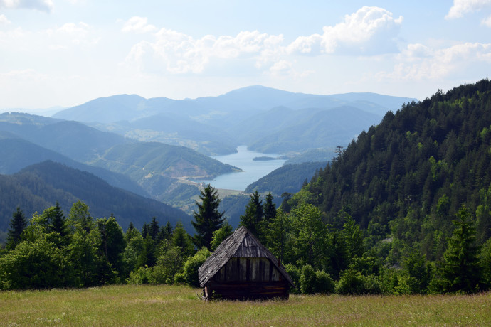 Na zboczu góry Tara w Serbii © Dragan Drobac