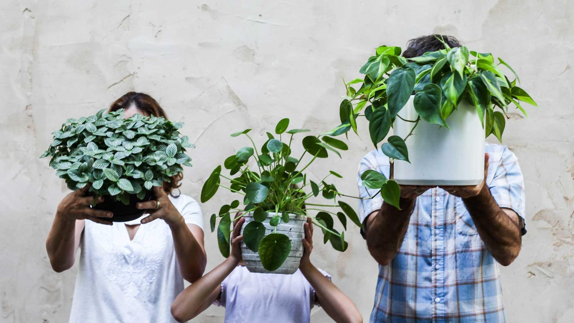 Holding Good Dirt house plants