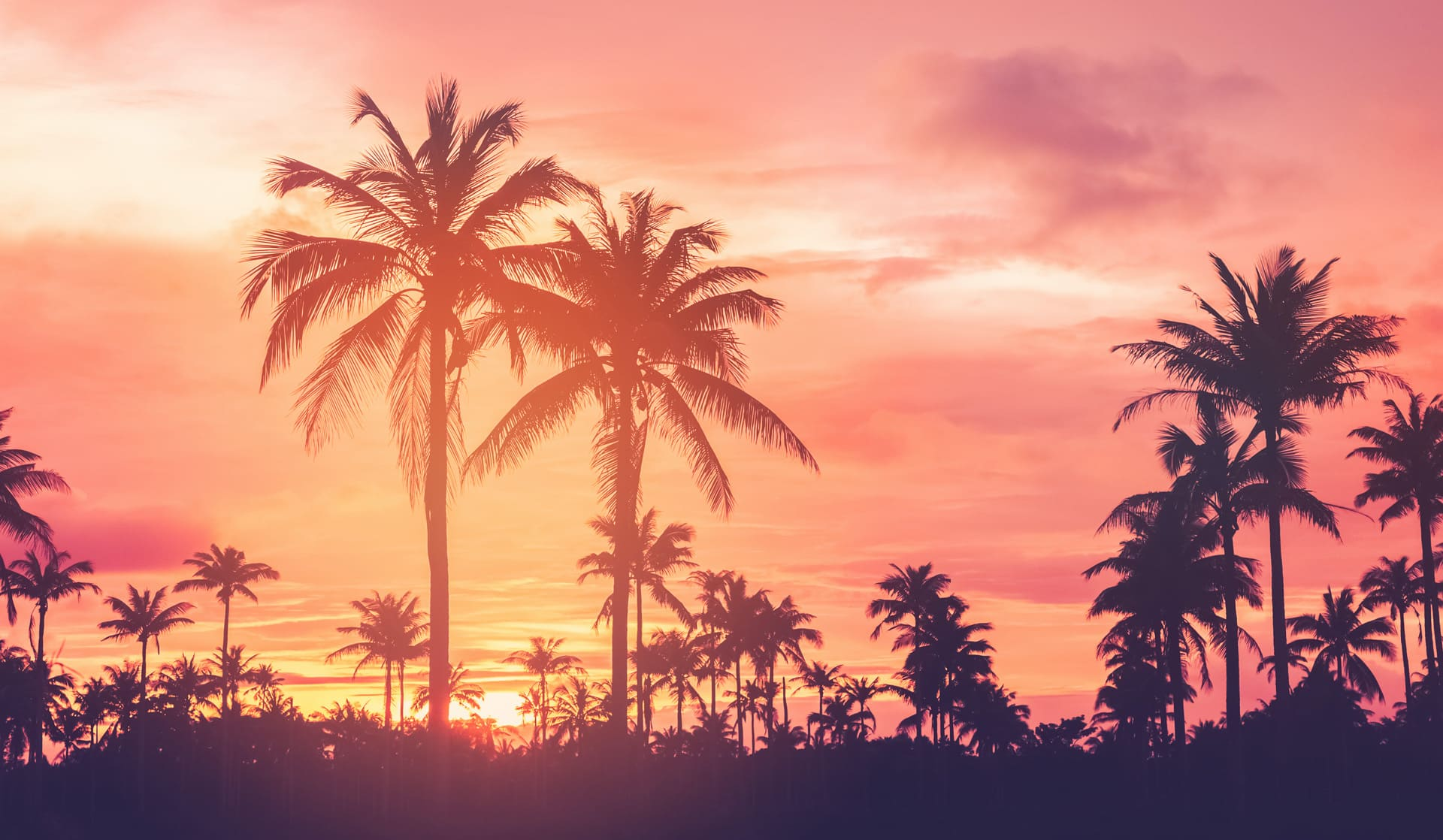 Southern California sunset scene with palm trees in front of an orange and pink sky.