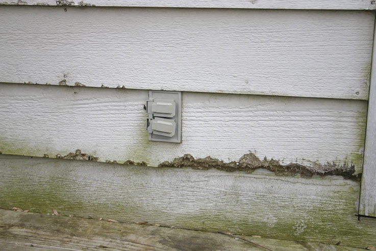 Siding Water Damage and Mildew