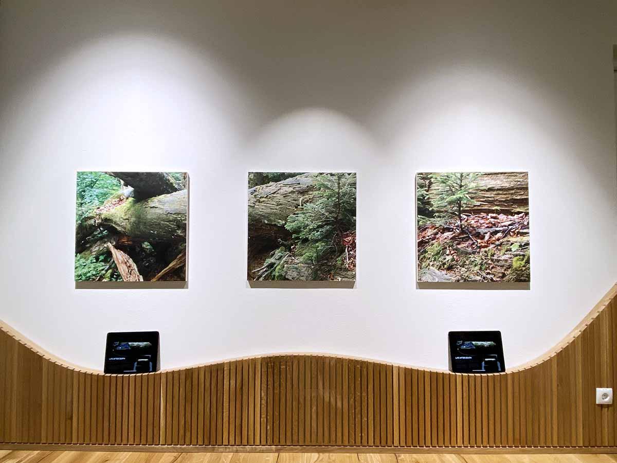 Augmented-Reality-Installation im Museum Haus der Wildnis in Österreich