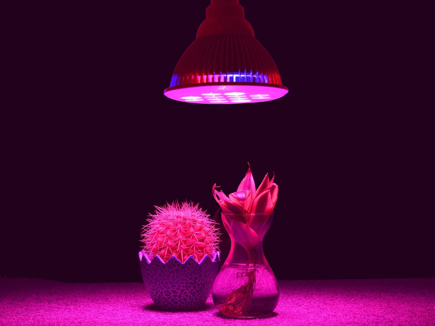 What Are The Main Types Of Grow Lights Beginner S Guide