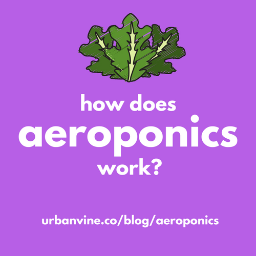 How does aeroponics work (A beginner's guide)