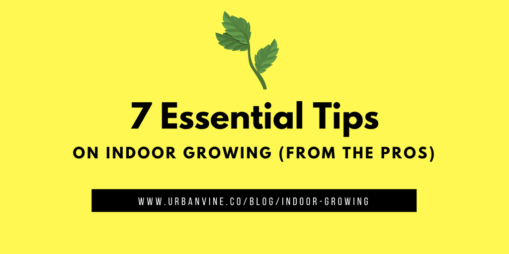 7 Essential Vertical Farming Beginner Tips with Eric Amyot of ModularFarms.co [interview[