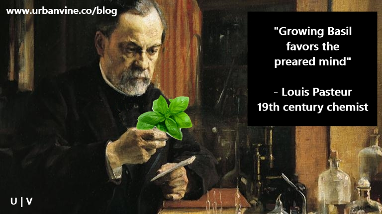 Growing basil favored the prepared mind