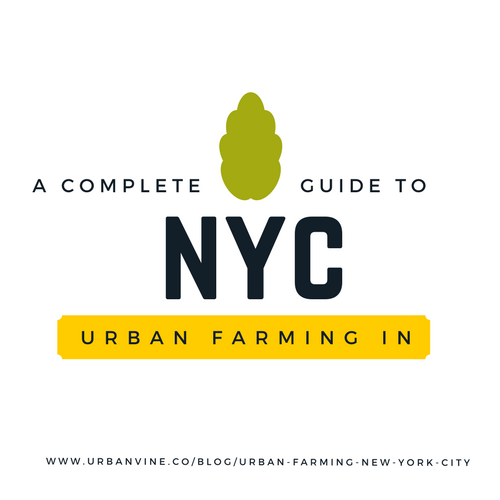 A complete guide to urban farming in new york city