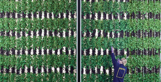 Driscoll's, Plenty research vertical farming for strawberries - Fruit  Growers News