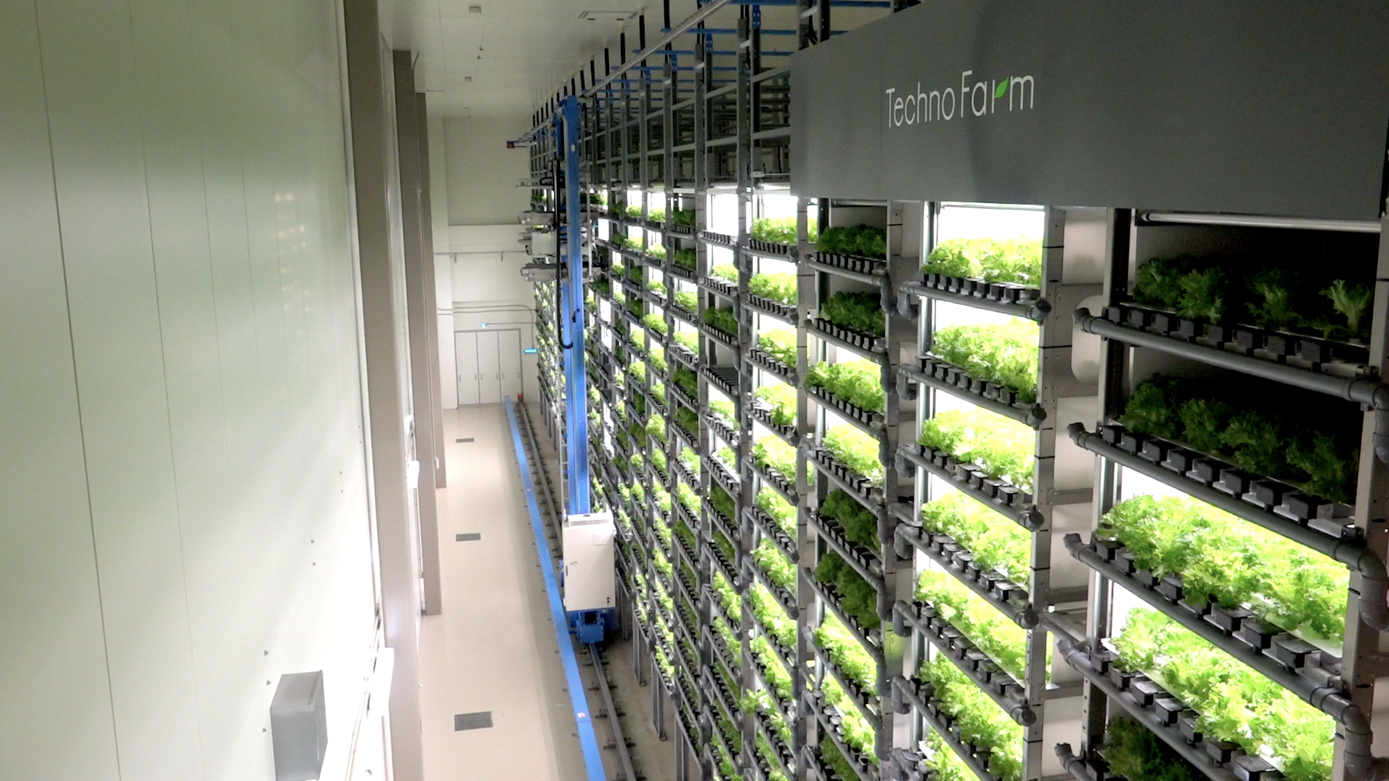 Kyoto's SPREAD Co., Ltd. Brings Large-Scale Expertise to the AVF -  Association for Vertical Farming