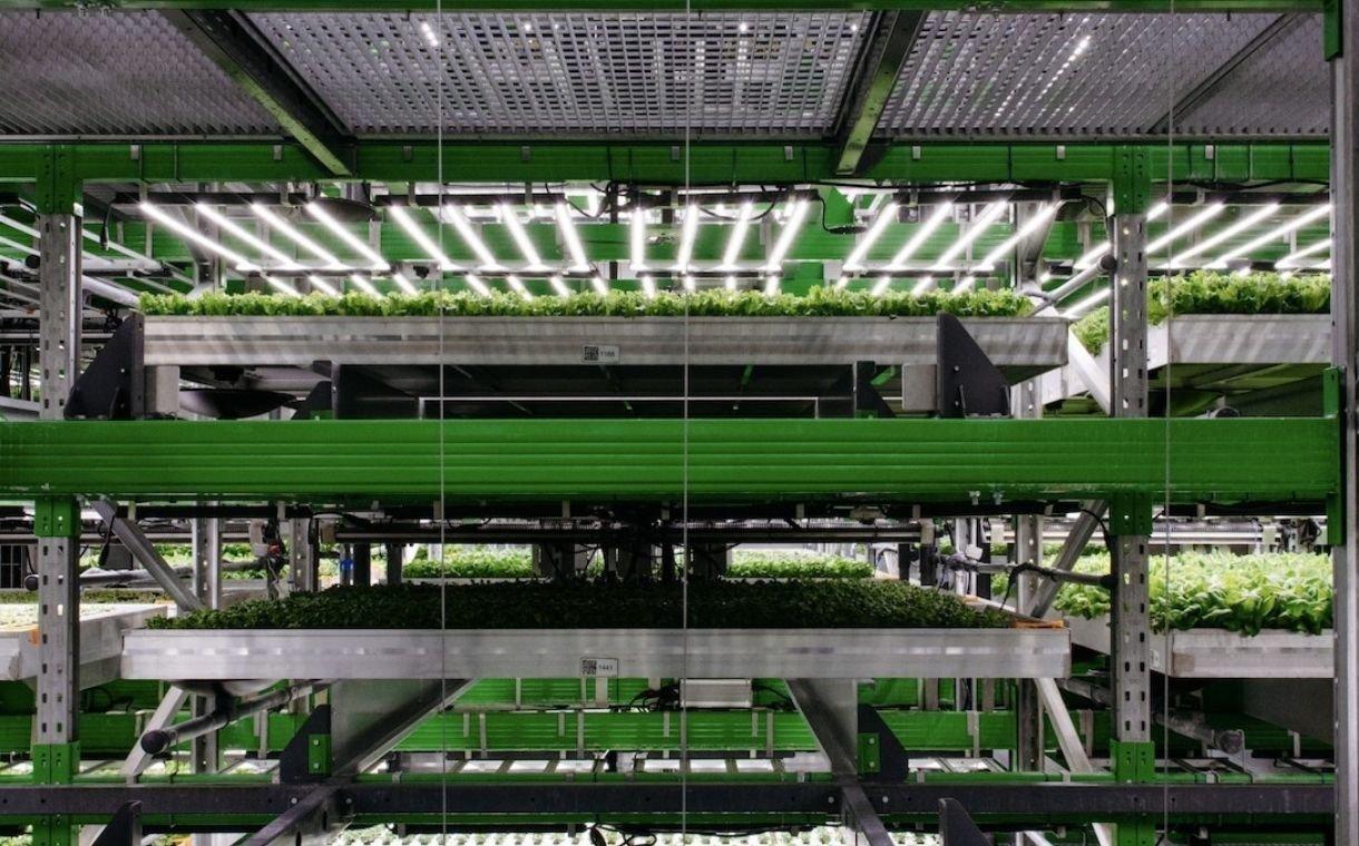 Vertical farming company Bowery Farming secures $300m in funding - FoodBev  Media