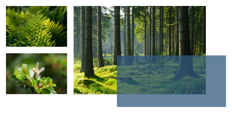 Bestattungen im Wald