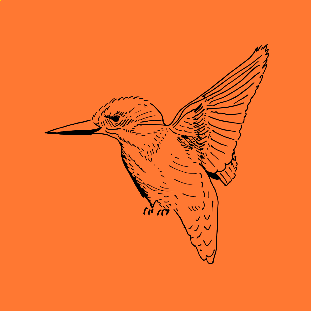 Outline drawing of a Kingfisher bird on orange background.