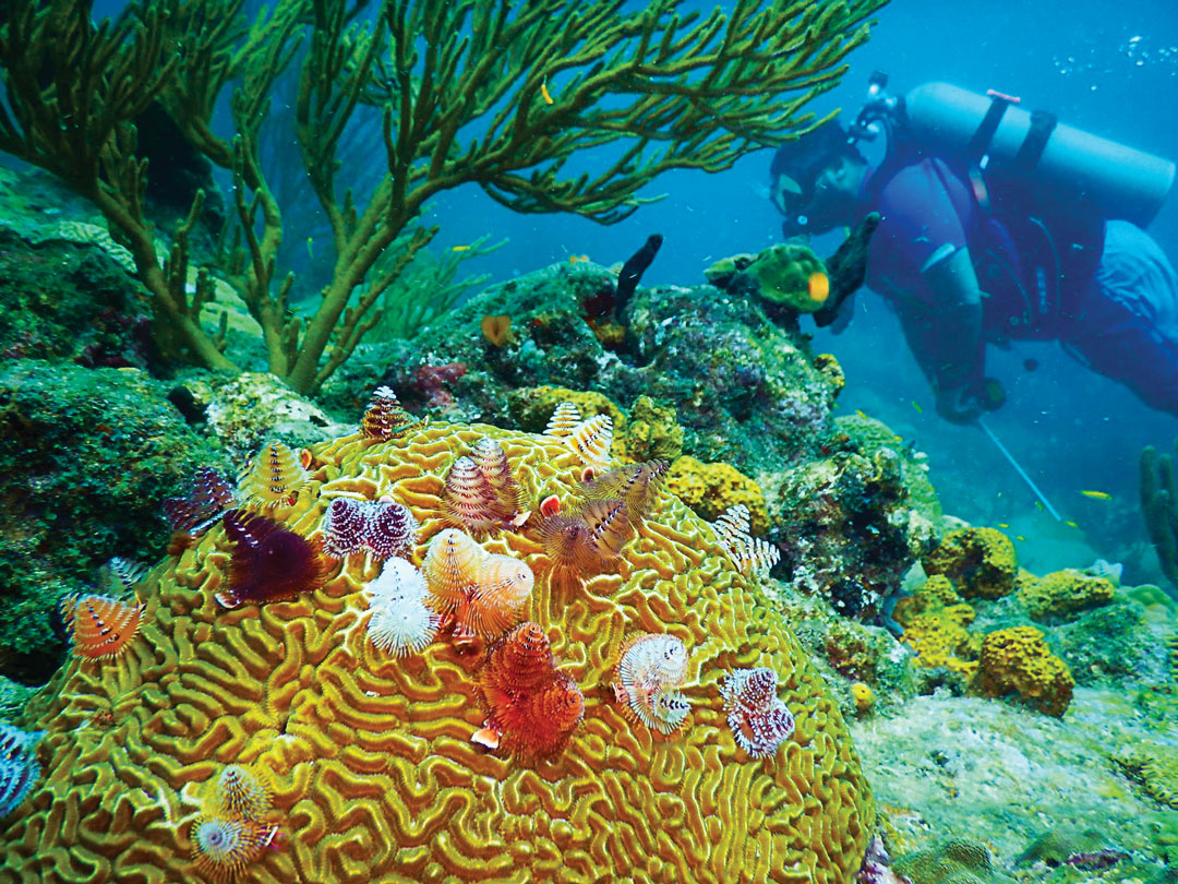 Coral Christmas Works, Photo courtesy Dive Bequia