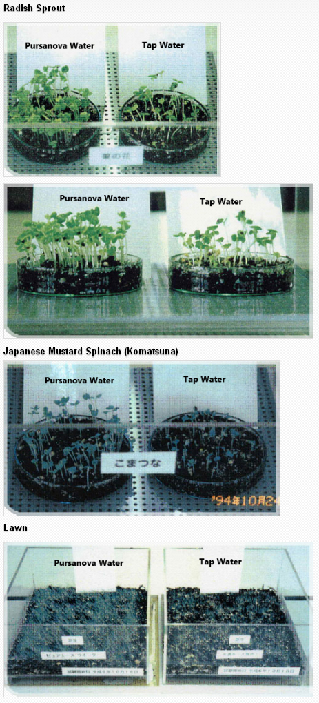 The Faster Growth In Pursanova Water