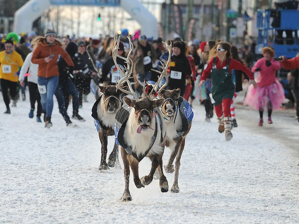 running of the reindeer fur rondy downtown anchorage