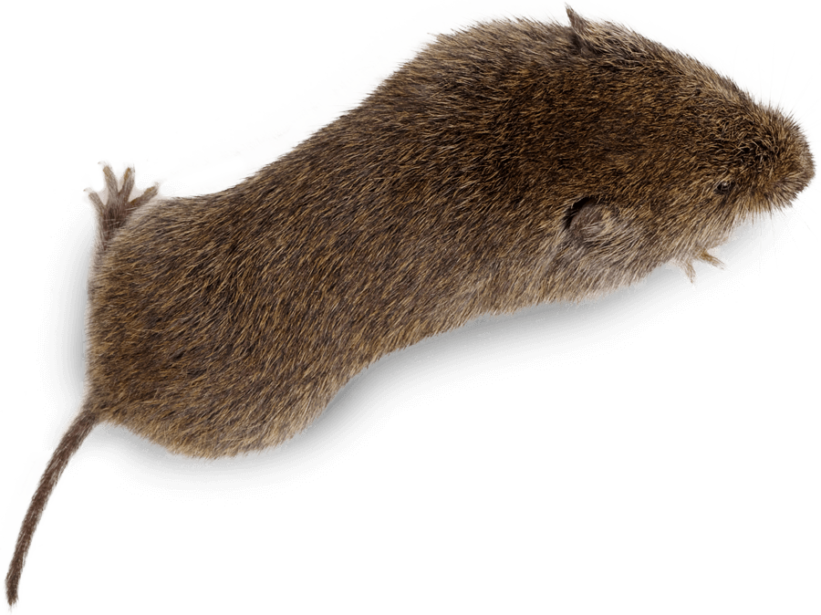 Moles and voles pest control treatment from Sudden Death