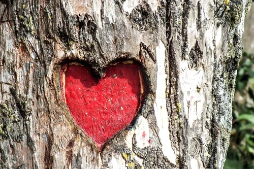 Red heart in a tree