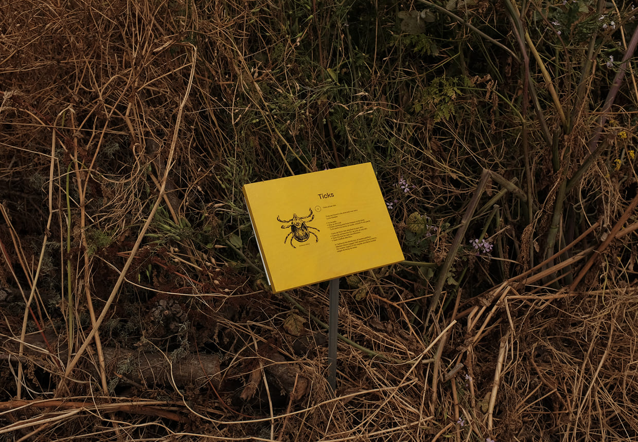 a small yellow sign emerges from a dense thicket of various coastal plants. The sign both warns and educates visitors of ticks, and has a black and white illustration of a tick on the left side.