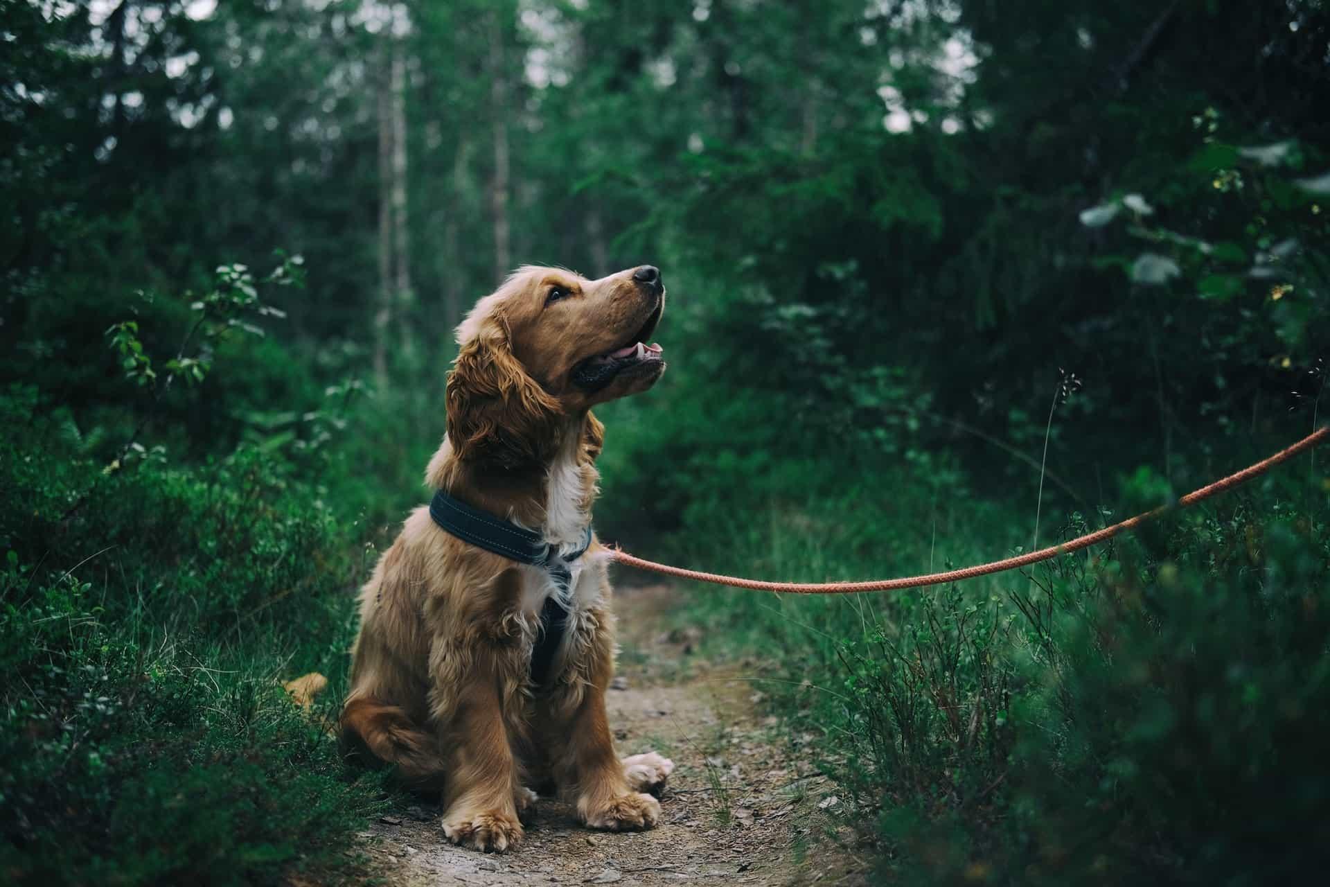 taking dog for walk