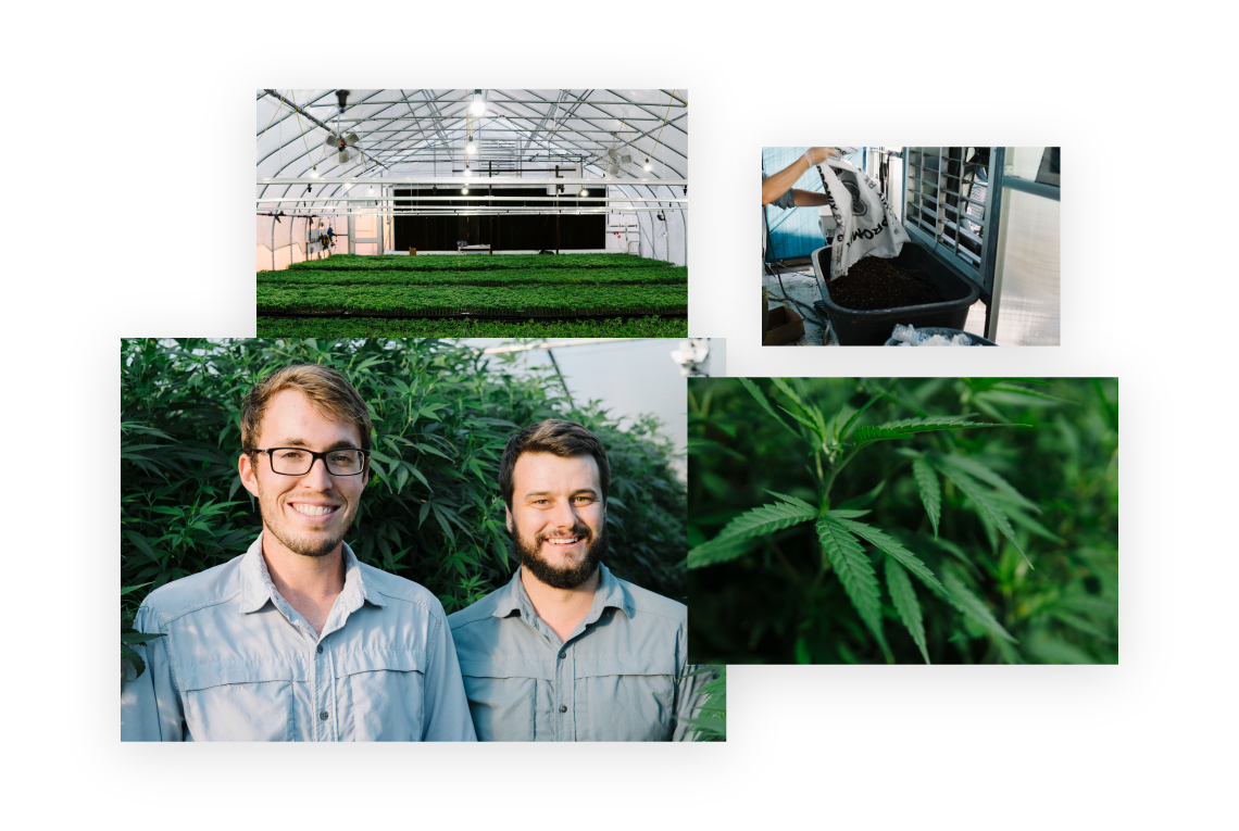 Photo collage of hemp plant, hemp greenhouse, farming soil, and Triangle Hemp founders Matt Spitzer and Chase Werner