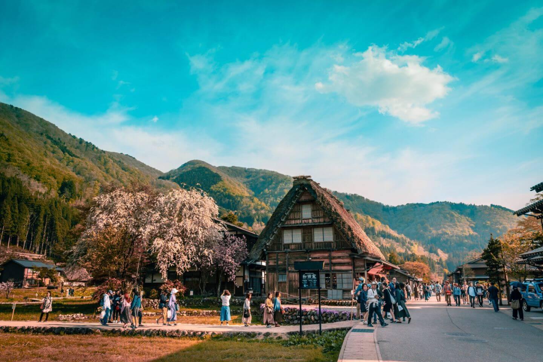 Japan Sakura & Tulip Blossom + Tateyama