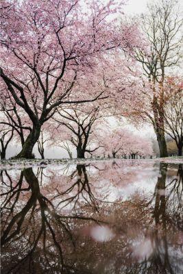 Spring in Korea & Jeju Island