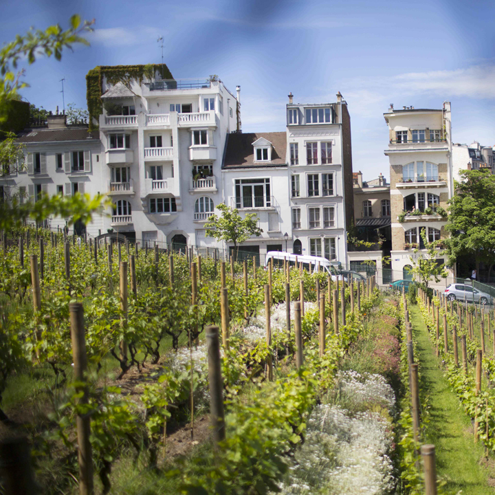 Le Clos Montmartre: Red, rosé and rebellion