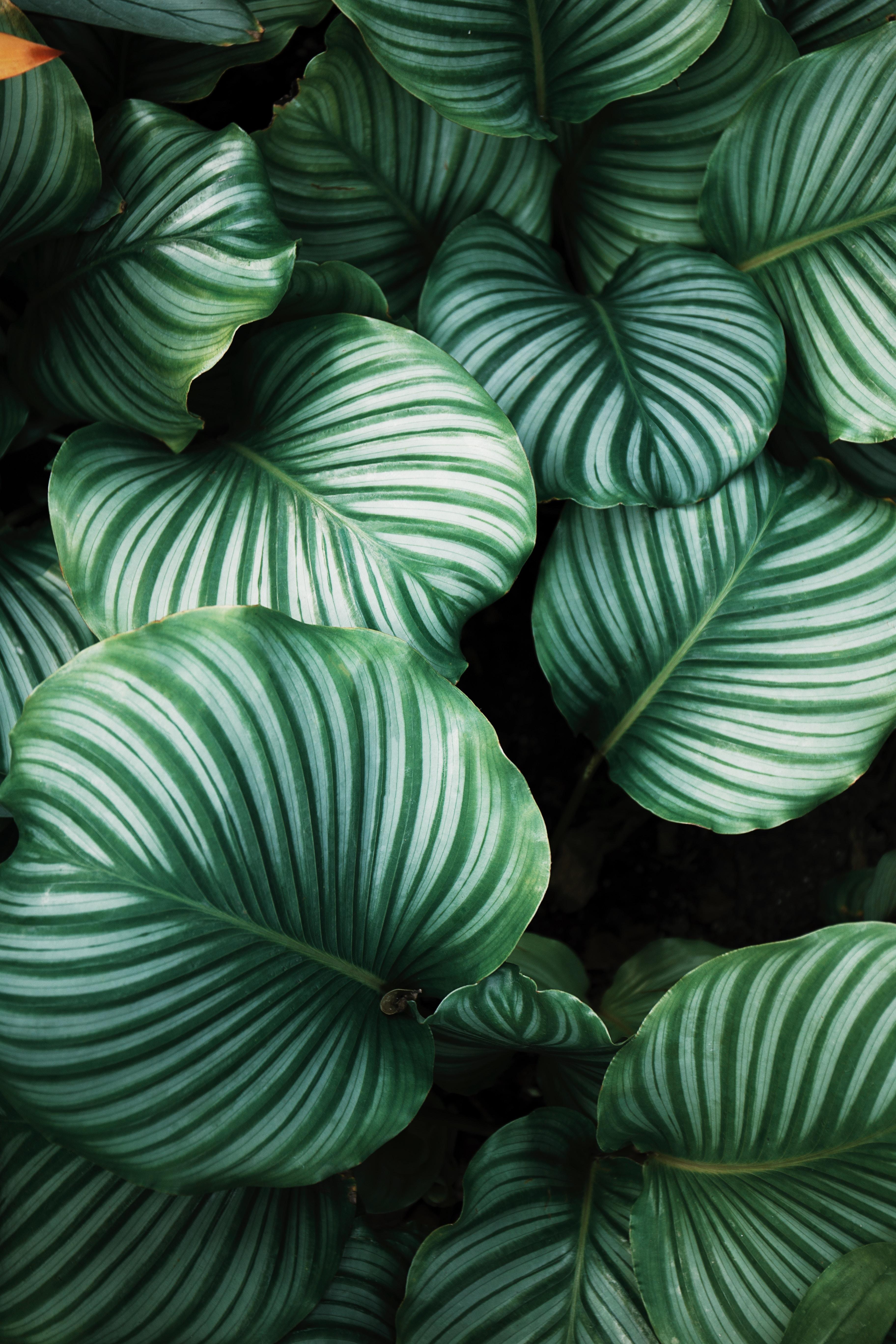 Green monstera leaves used as header image.