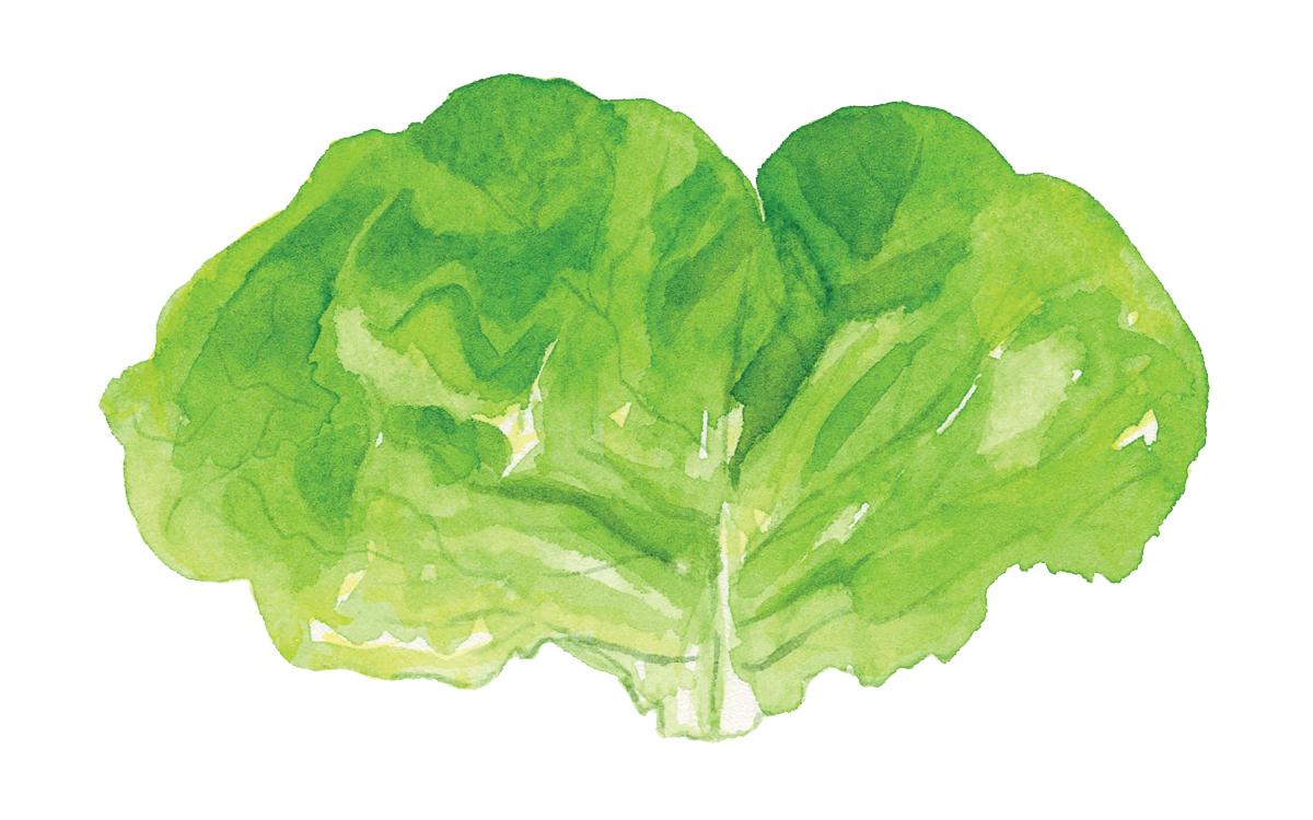 Abra Beren's Buttermilk and Butter Lettuce Salad