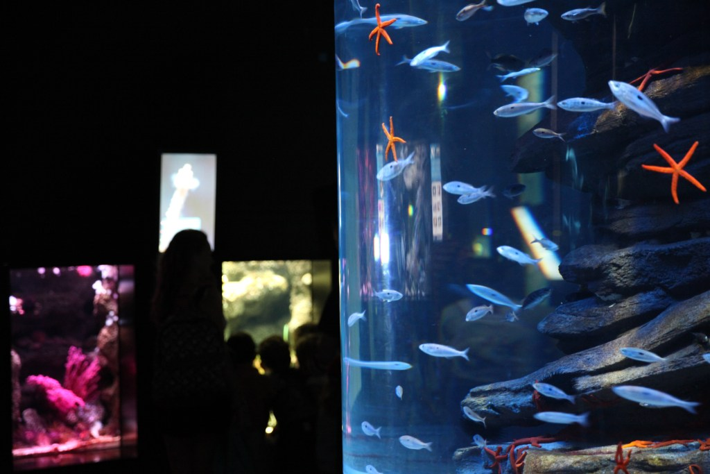 Aquarium Paris anniversaire enfants