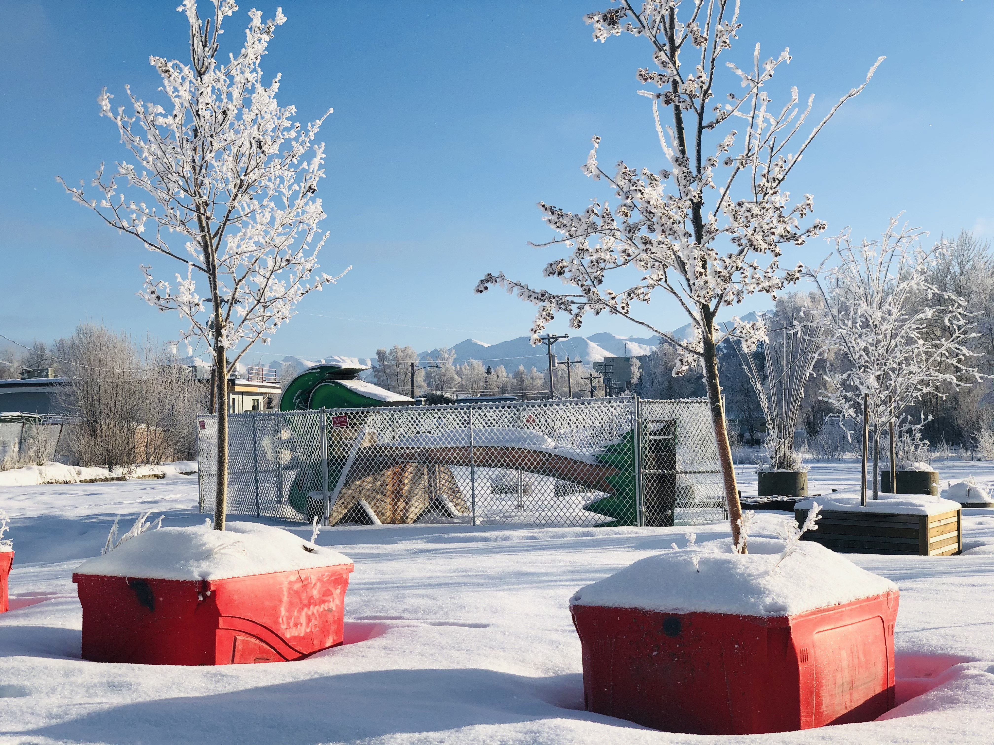 The paradise palm has been on the corner of Chugach Way and Spenard Road for over two years, but the Spenard Community Council announced new plans for the tree at their February meeting.