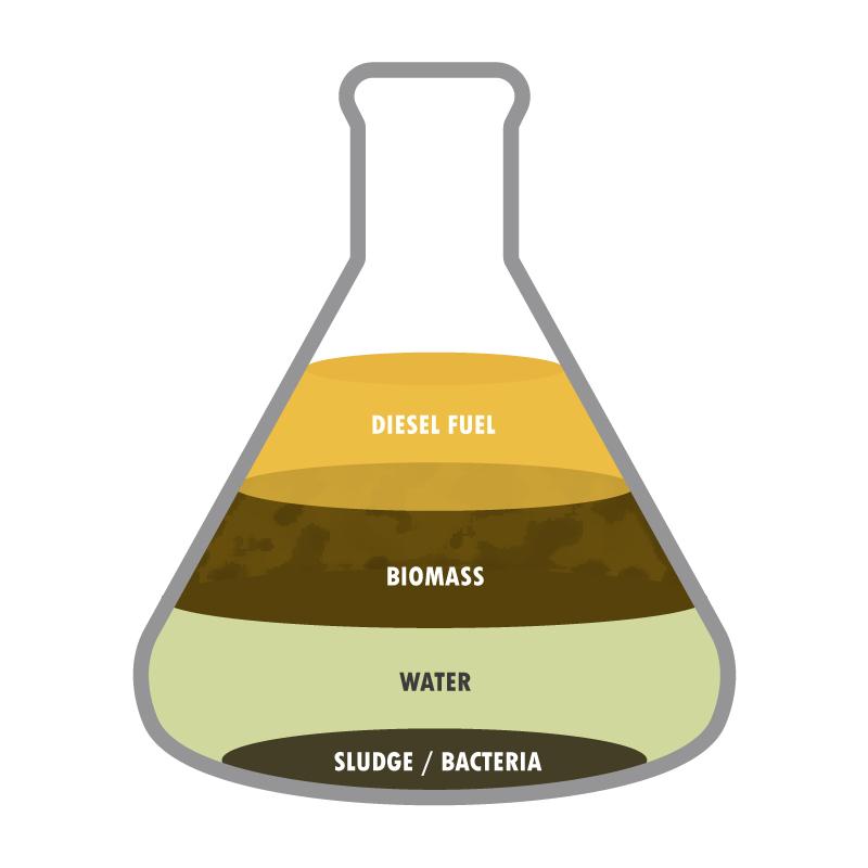 Bio-diesel bug diagram