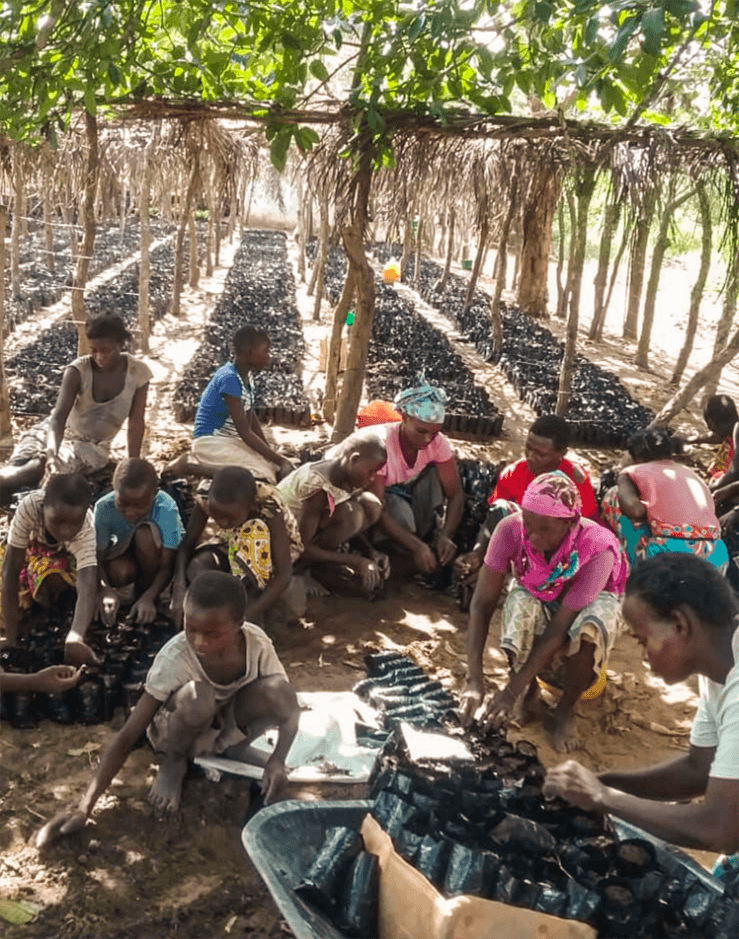 People in Africa planting trees