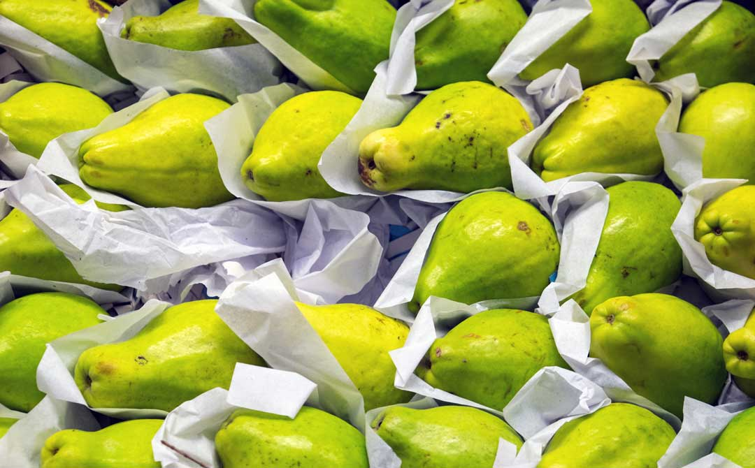 Pears wrapped in paper