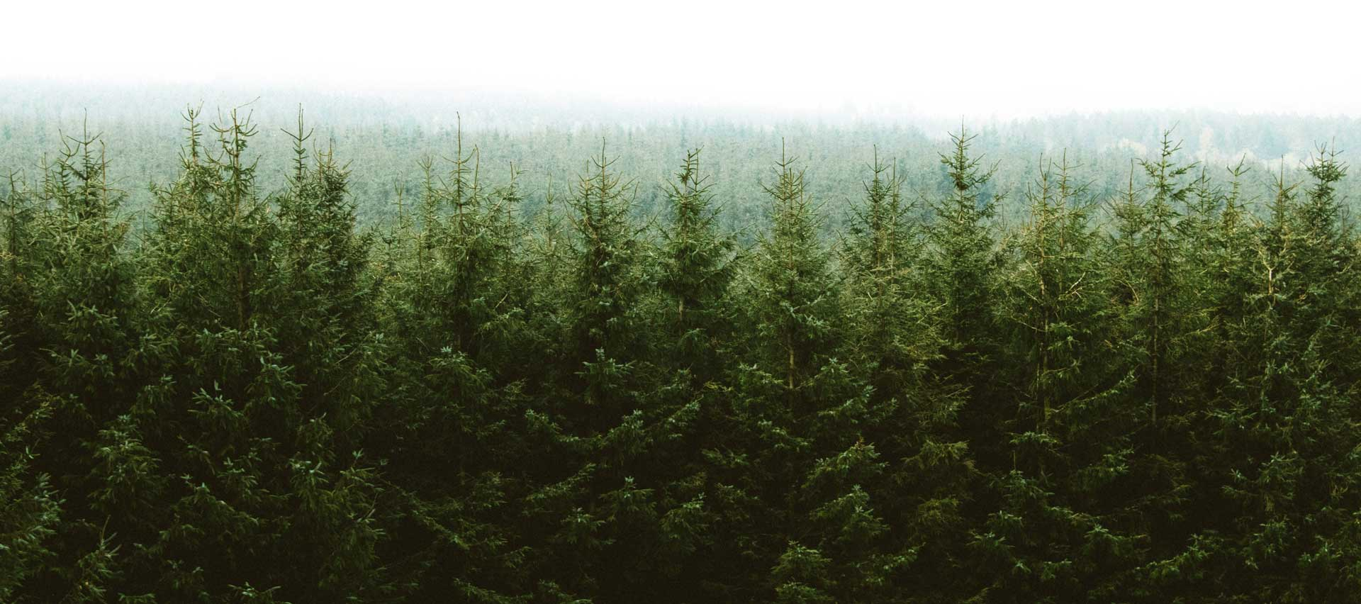 Forest tree line