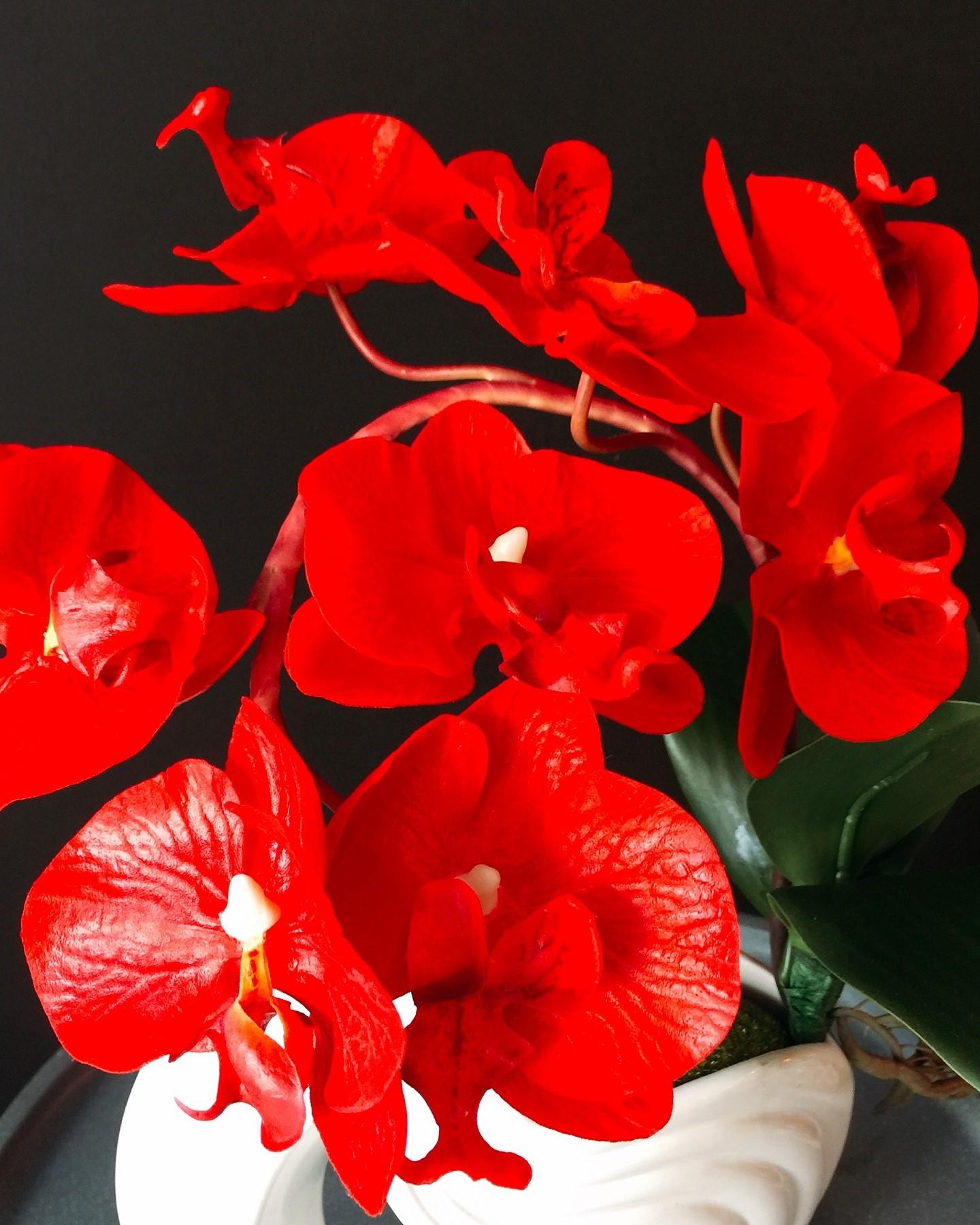 Các màu hoa Lan hồ điệp đẹp mê hồn được săn tìm nhiều nhất