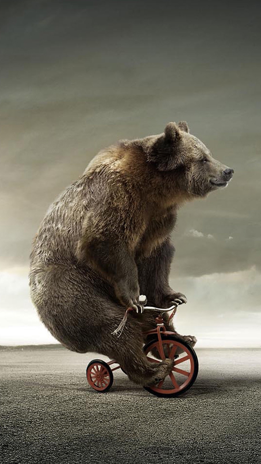 Bear on a tricycle