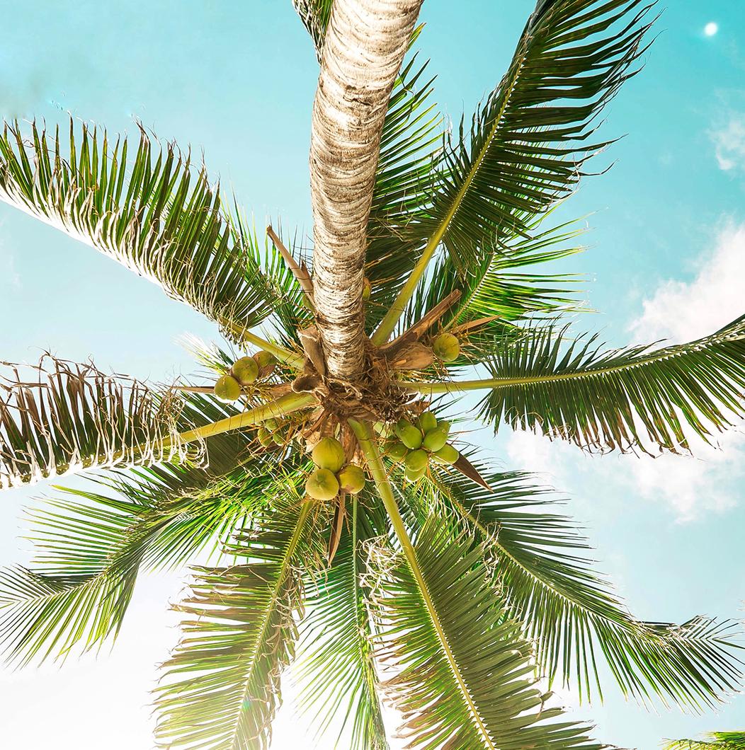 Água de coco é considerada Superfood?
