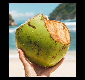 Mitos e Verdades da Água de Coco