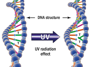 Image showing DNA degradation with UV light applied