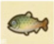 远东罗哲鱼