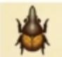 长戟大兜虫